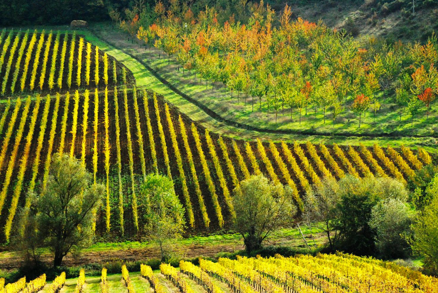 Azienda Agricola Il Palagione San Gimignano Siena